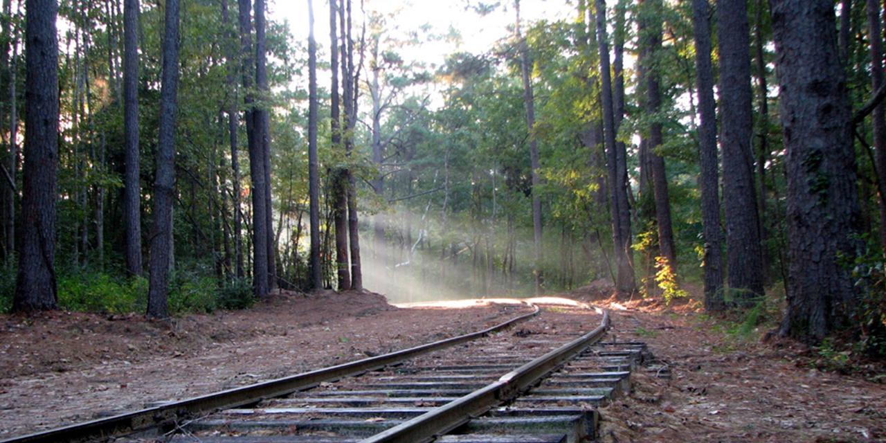 Ride the train at the Southern Forest Heritage Museum